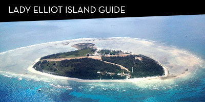 Lady Elliot Island Travel Guide