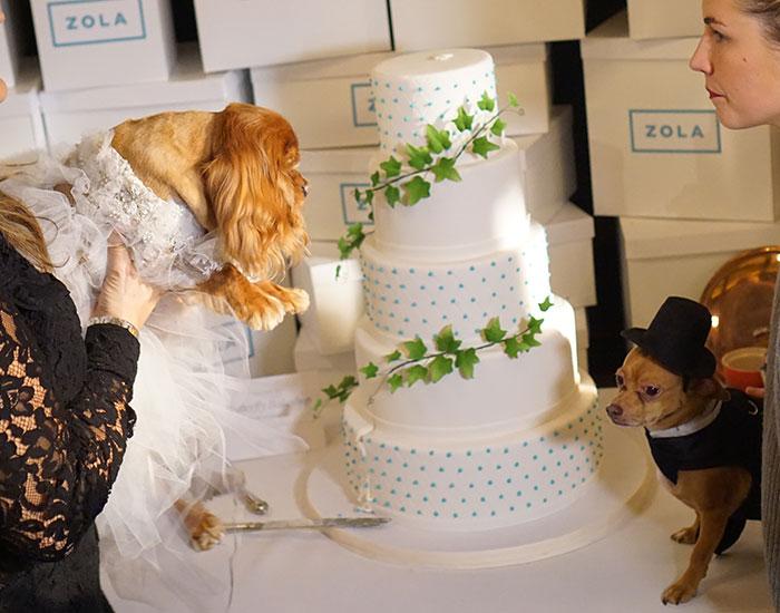 toast-and-finn-wedding2