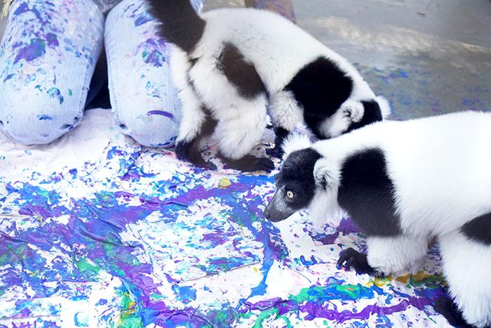 duke-lemurs