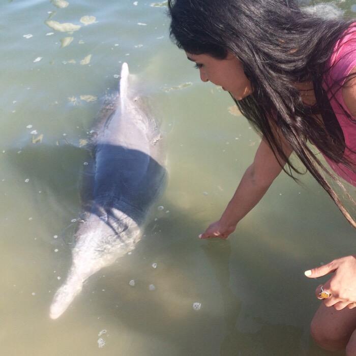 Dolphin feeding Australia
