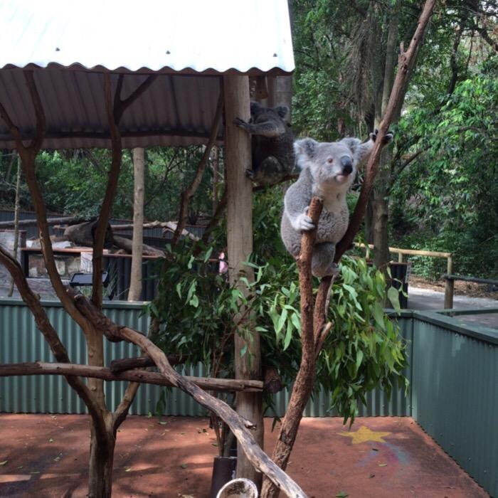 Lone Koala Sanctuary