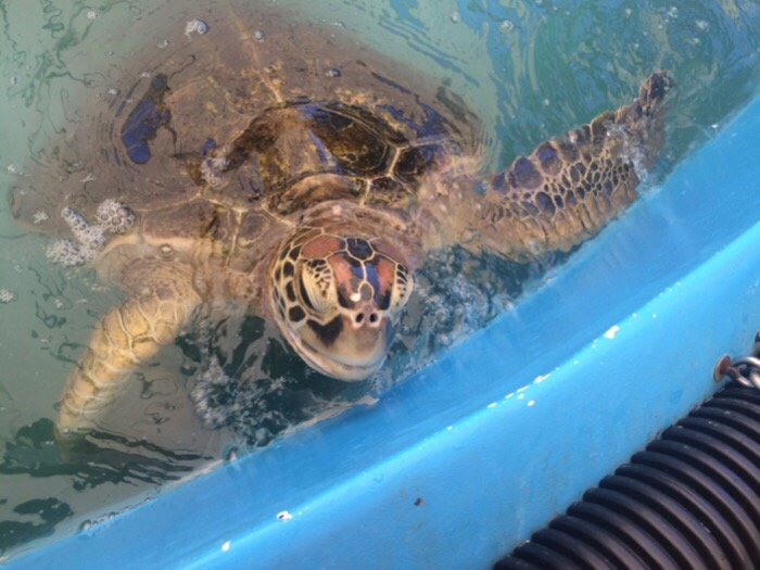 Cairns Turtle Rehabilitation Centre