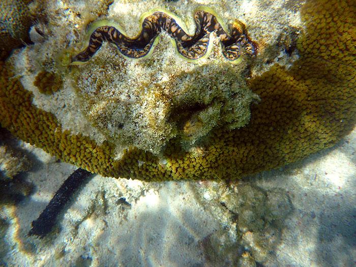 lady elliot coral snorkel island dive australia