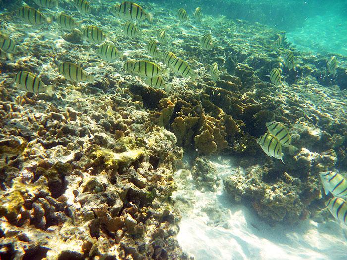 lady elliot fish island snorkel australia