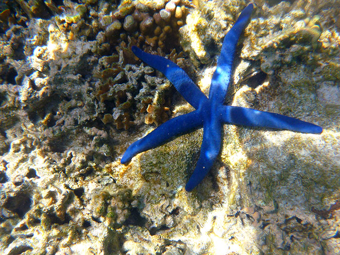 lady elliot starfish snorkel dive australia