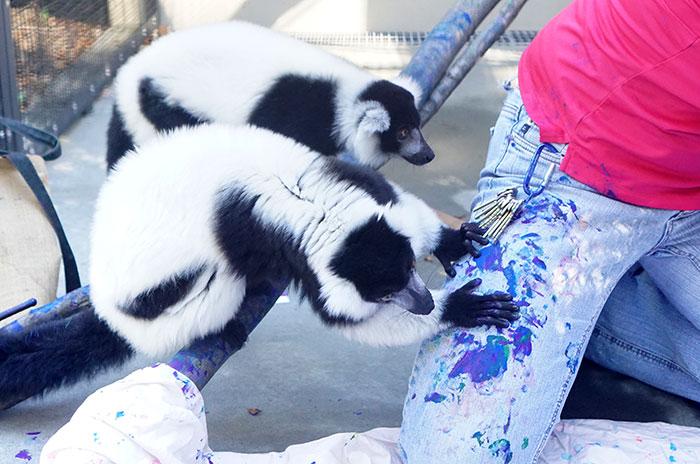 duke-lemur-center-painting-with-lemurs